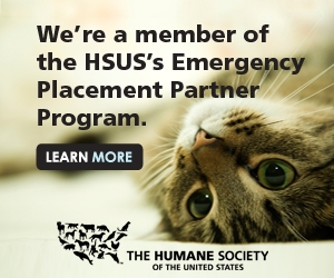 link to hsus emergency placement partner program