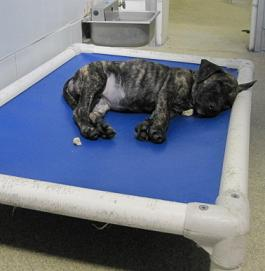 a puppy sleeps peacefully on a kuranda cot