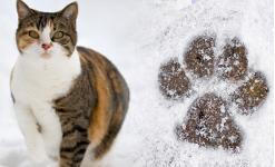 a cat in the snow next to a dog paw print in the snow