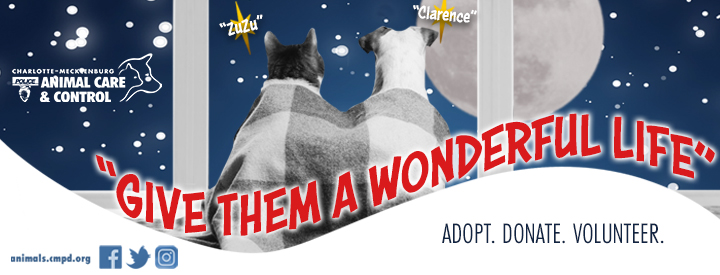 adopt an adult dog over 4 months, cat, or kitten for free with a monetary donation
