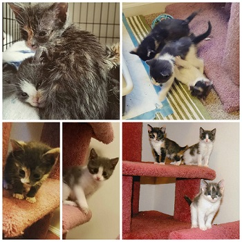 scraggly kittens growing up big and healthy thanks to a foster home