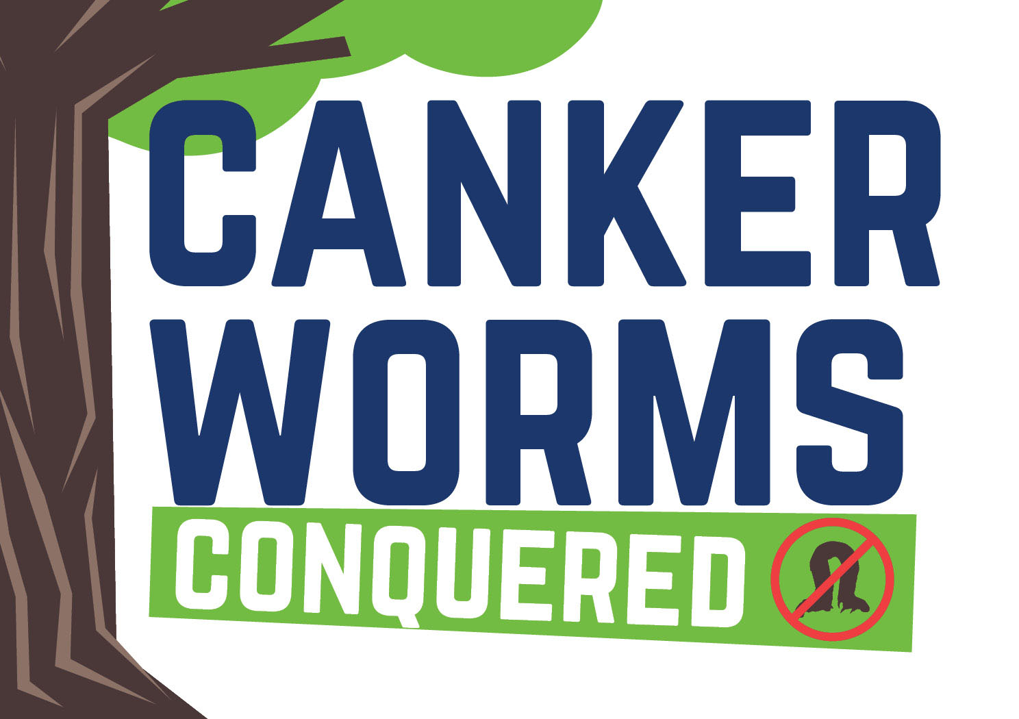CAnkerworms conquered