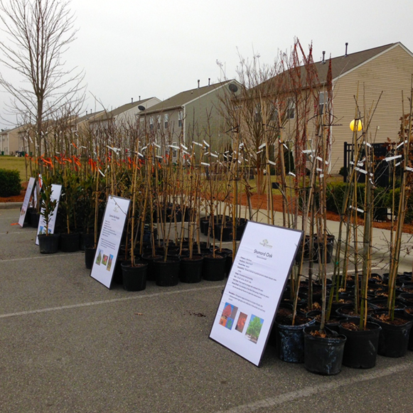 Tree saplings lined up in a parking lot