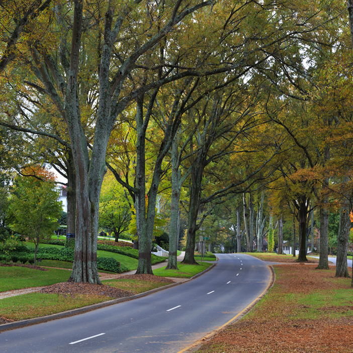 Charlotte Street with tall arching trees and leaves